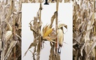 Mathieu Asselin. Monsanto®: The Book