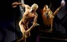 Real Bodies. Scopri il corpo umano