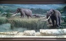 La zanna di elefante di Città Sant'Angelo