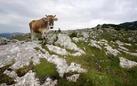 Gabriele de Filippo. Grassland. Praterie montane del Parco Nazionale del Cilento, Vallo di Diano e Alburni