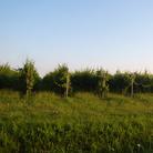 Azienda vitivinicola Puntin